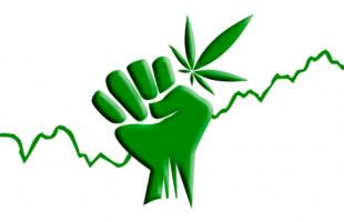 La legalización de la marihuana una solución para la economía de México