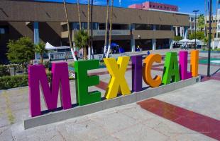 Mexicali; en la piel de un cachanilla
