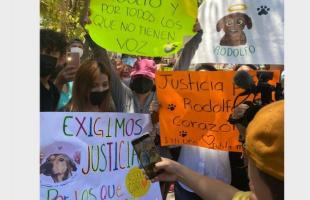 Justicia para Rodolfo: México se indigna ante el asesinato del perro Rodolfo Corazón