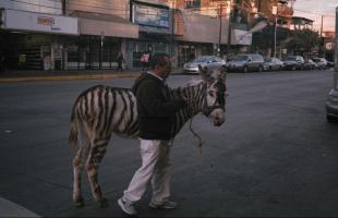 """(Relato) """"A patas y rayas"""" por Sofía Jiménez"""