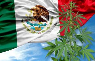 La historia de la marihuana y su proceso de legalización en México