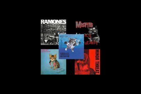 Gatitos, los protagonistas de algunas portadas de discos clásicos del rock